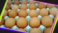 「生体エネルギーの卵」入荷しました!