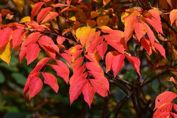 鳥海山奈曽渓谷の紅葉