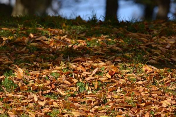 落ち葉のふとん