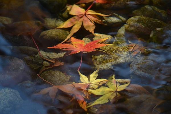 水に沈む枯葉たち