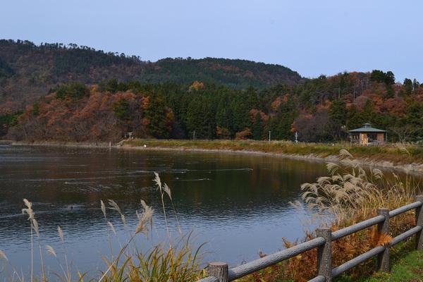 大山下池のオオバン