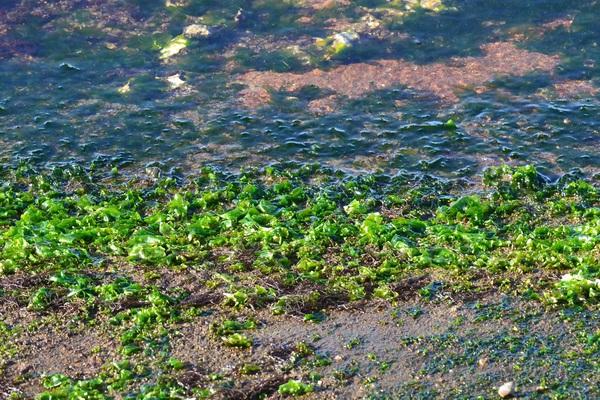 吹浦港の海苔