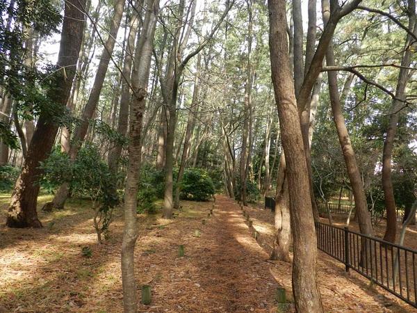 光ヶ丘の明るい林を歩く
