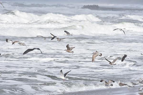 季節風吹く宮海海岸