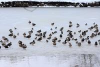 冬の小出沼