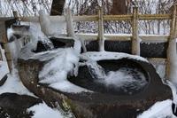 厳寒の湧水地