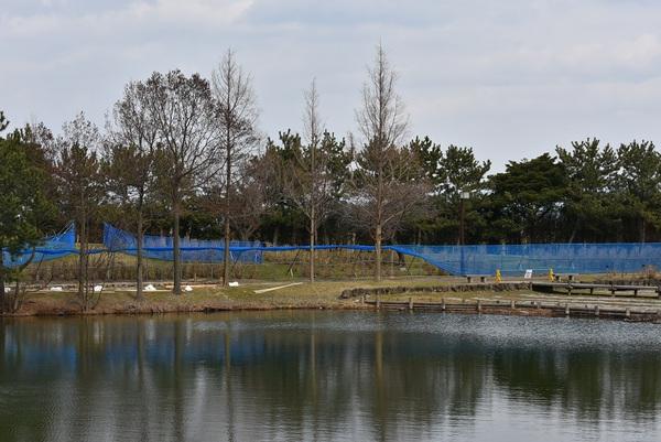 白鳥池の水面のどか
