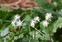 真白き春の花見つけた 2017/03/10 08:04:00