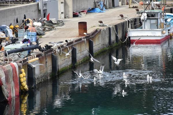 飛島、勝浦港の風景