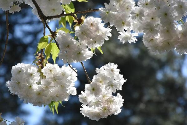 春真っ盛りの万里の松原