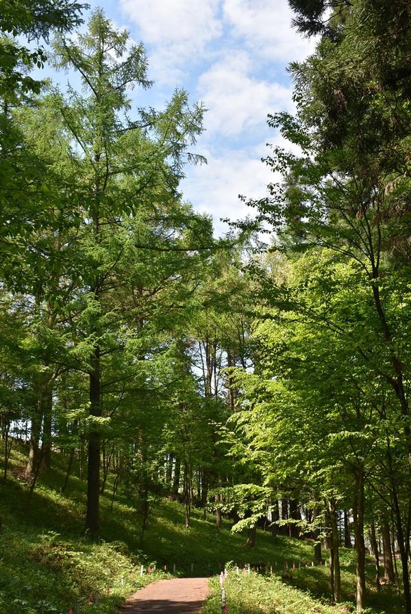 八森自然公園は初夏