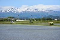 田植えどきの風と鳥海山
