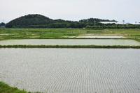 5月の景色(飯森山・高見台)