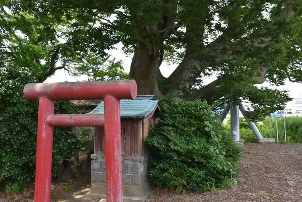 三川町、山の神のケヤキ