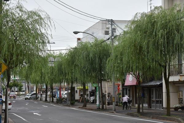 酒田市柳小路の柳の風情