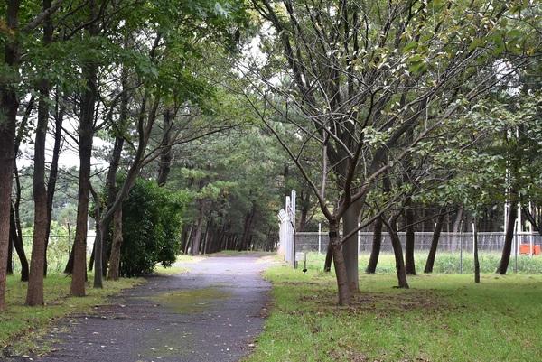 庄内空港緩衝緑地の林内散歩