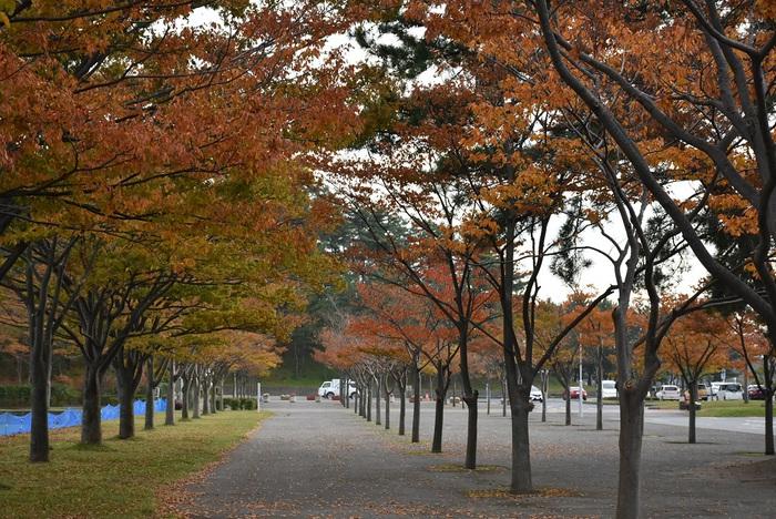 秋深まる飯森山公園