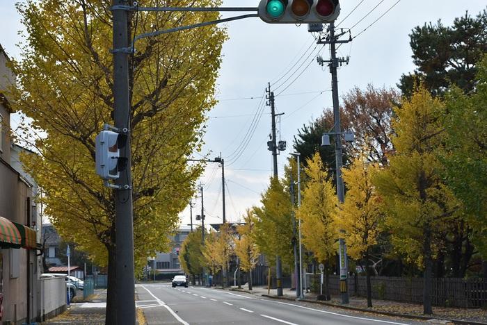 浜田1丁目の銀杏並木