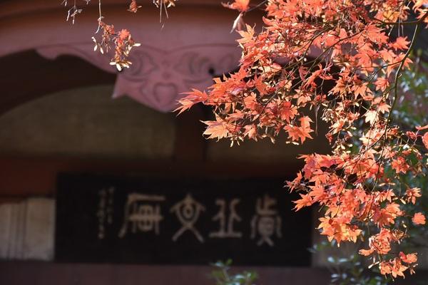 三王森の黄葉・紅葉