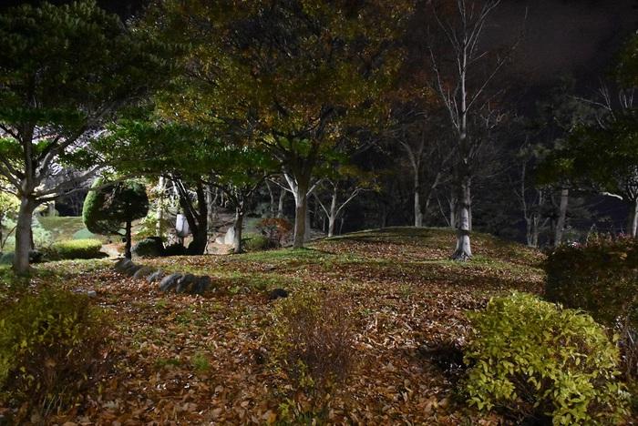秋の夜の亀ヶ崎公園