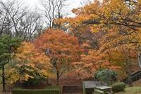 土門拳記念館脇の紅葉