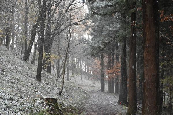 初雪の八森自然公園