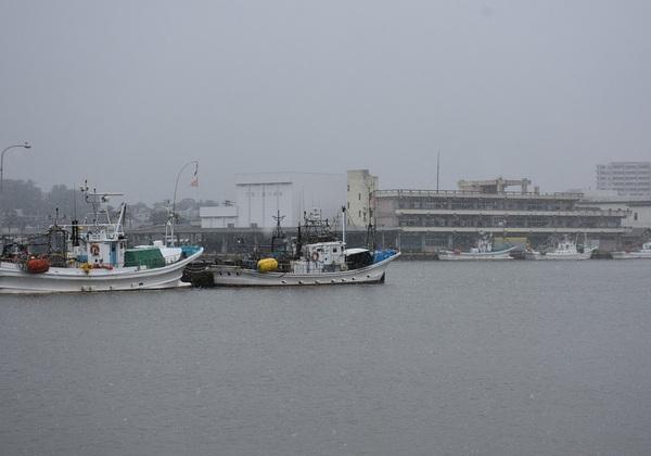 小雪舞う酒田本港