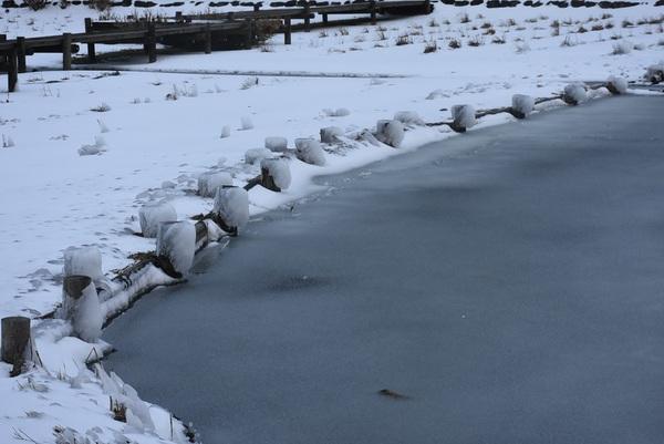 白鳥池は氷の世界