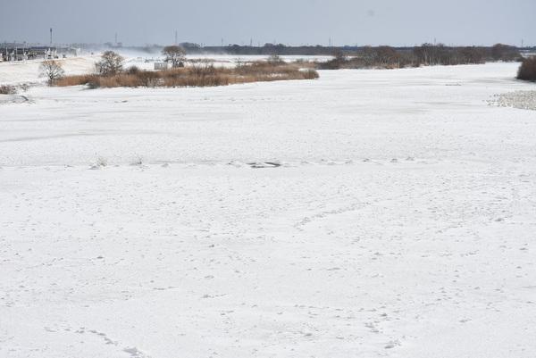 最上川に氷の蓋(ふた)
