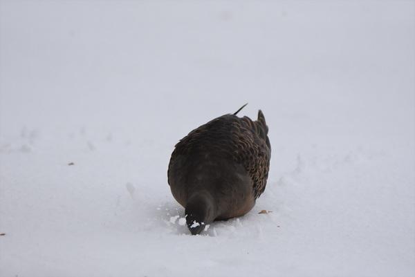 懸命に生きる雪の中の野鳥たち