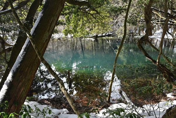 冬晴れの丸池様