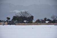 活躍する葦製防雪柵