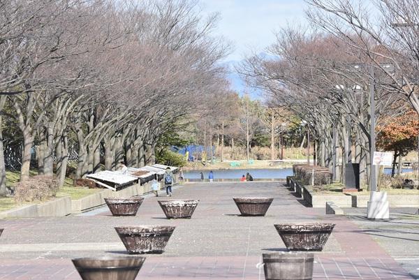 飯森山公園の春