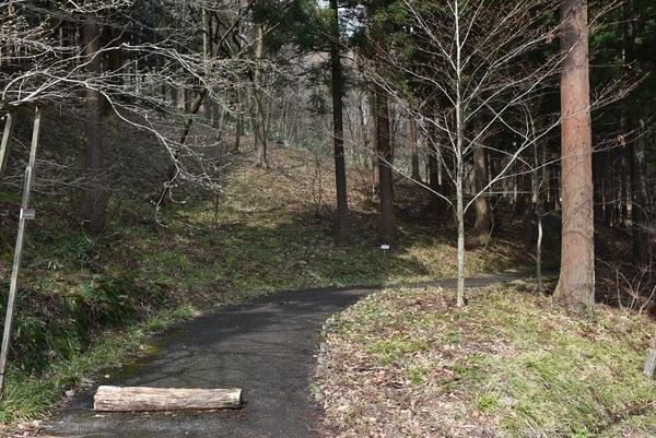カタクリ咲く八森自然公園