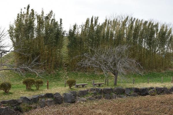 北部公園の竹林(たけばやし)