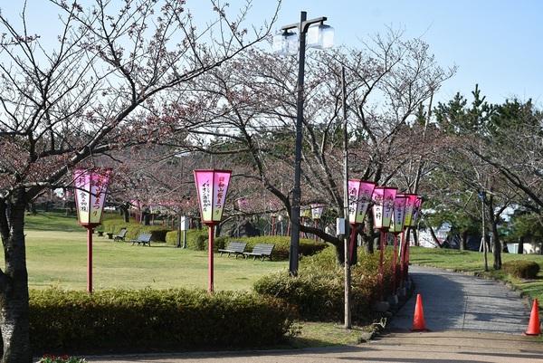 いよいよ桜の出番