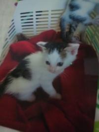 鶴岡Cats愛ママさんありがとう!!