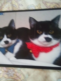 Cats愛にいた仔