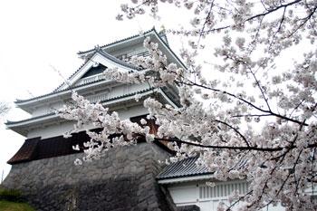 上山城の桜