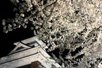 上山城の夜桜