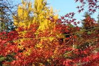 上山城の紅葉