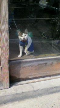ベストドレッサー猫☆