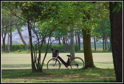 ☆上山・市民公園~新緑の森林浴☆