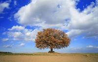 かつて1株の木孤独