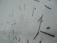 新雪に、謎の文様…?