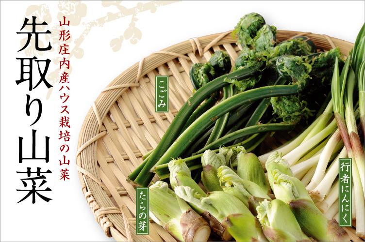 山形県庄内産ハウス栽培の山菜