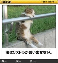 笑える猫写真です
