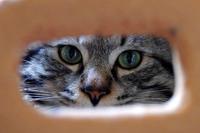 猫眼鏡堅麺麭
