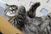 カツカレー猫