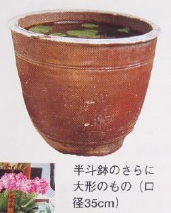 桜草鉢 孫半土 売ってます!